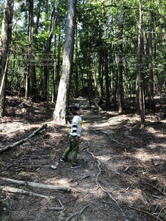 森林浴の写真・画像素材[3990157]