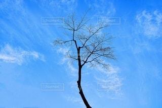 青空の中の木の写真・画像素材[4011367]