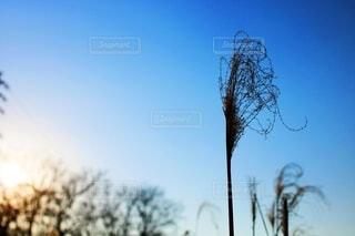 夕日の写真・画像素材[4190337]