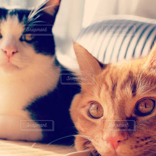 猫が好きの写真・画像素材[179623]