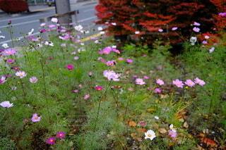 秋の花の写真・画像素材[3984955]