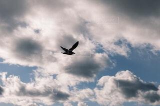 飛んでいる鳥の写真・画像素材[3985026]