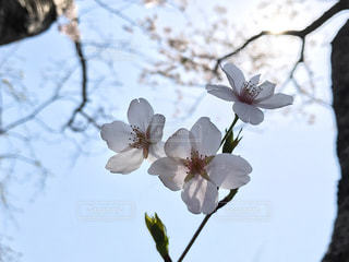 No.430767 春