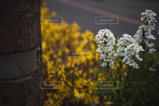 花と木の写真・画像素材[4282213]