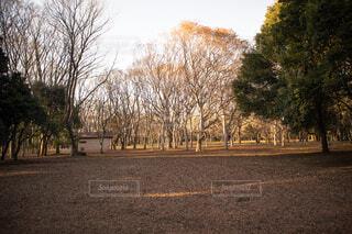 公園の木々の写真・画像素材[4282226]