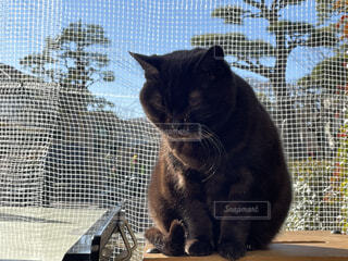 日向ぼっこでまったりな黒猫の写真・画像素材[4025775]
