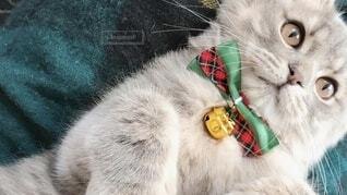 猫 子猫 クリスマス Xmas christmas サンタ コスプレの写真・画像素材[3995620]