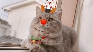 猫 子猫 クリスマス Xmas christmas サンタ トナカイの写真・画像素材[3995669]