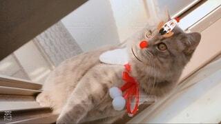 猫 子猫 クリスマス Xmas christmas サンタ トナカイの写真・画像素材[3995670]