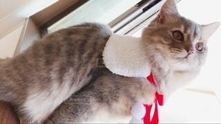 猫 子猫 クリスマス Xmas christmas サンタ トナカイの写真・画像素材[3995671]
