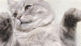 かわいい子猫の写真・画像素材[3996458]