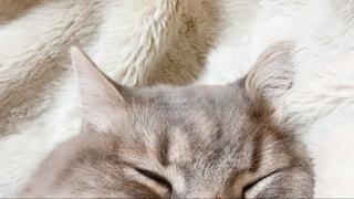 猫耳の写真・画像素材[3996464]