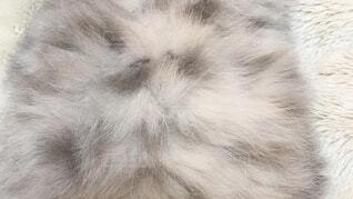 冬毛の猫のお腹の写真・画像素材[3996469]