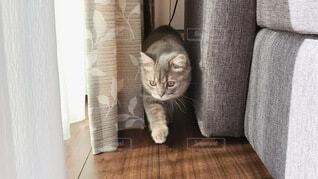 歩く猫の写真・画像素材[3996481]