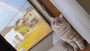 虹のある空と猫の写真・画像素材[3996658]