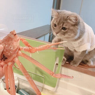 猫と蟹の写真・画像素材[4010922]