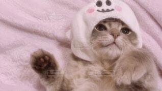 2020ハロウィン猫おばけ被り物の写真・画像素材[4045029]