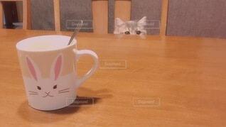 朝 コーヒー 猫の写真・画像素材[4045030]