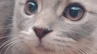 猫 アップの写真・画像素材[4045055]