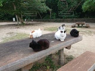 公園で集会中の猫の写真・画像素材[3999348]
