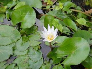 池のクローズアップの写真・画像素材[4002359]