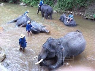 象の上に座っている人々のグループの写真・画像素材[4005137]