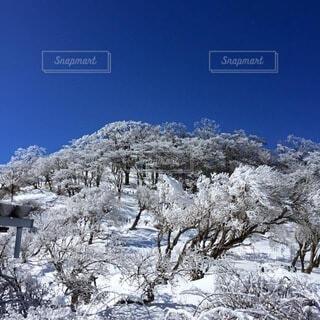 雪に覆われた斜面の写真・画像素材[4005179]