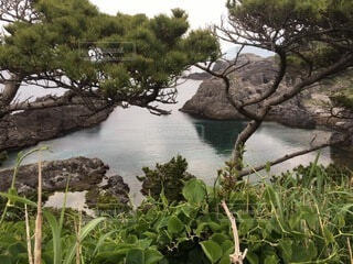 水の体の隣にある木の写真・画像素材[4005178]