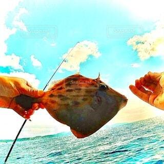 supフィッシングでカワハギ釣りの写真・画像素材[3998267]