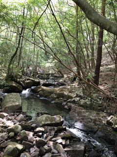 木の隣にある岩の近くの写真・画像素材[4074032]