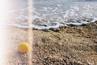 レモンぬの写真・画像素材[4227313]