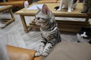 ネコかわいいの写真・画像素材[4514810]