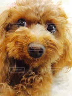 犬の写真・画像素材[168210]