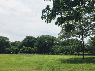 自然 - No.587737