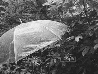 夏 - No.194847