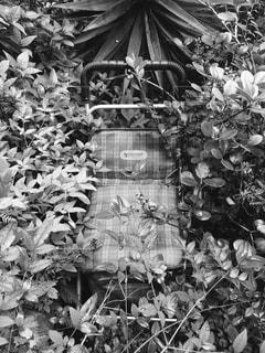 夏の写真・画像素材[195687]