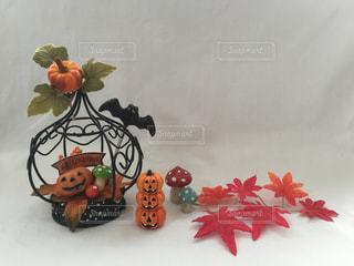 秋の写真・画像素材[239621]