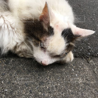 猫 - No.242964