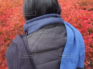 秋の写真・画像素材[260009]