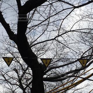桜の写真・画像素材[367536]
