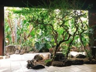 部屋の向こうはジャングルの写真・画像素材[4017854]