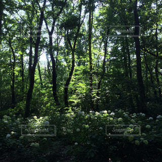 森林の写真・画像素材[168386]