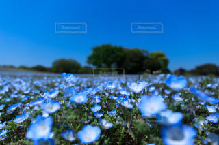 花の写真・画像素材[501873]