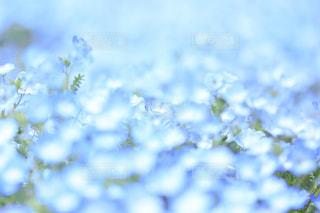 花の写真・画像素材[501874]