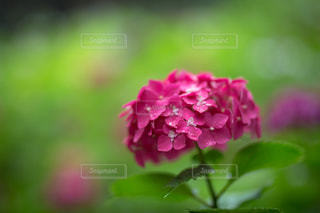 花の写真・画像素材[582218]