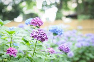 花の写真・画像素材[582219]