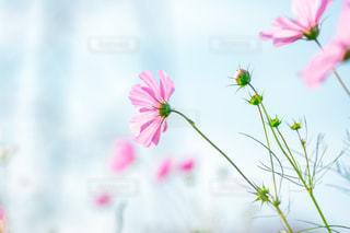 秋の花の写真・画像素材[2833653]