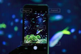 スマホで捉えた魚の写真・画像素材[2836370]