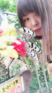 蝶の写真・画像素材[2858422]