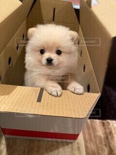 仔犬購入の写真・画像素材[4019873]